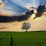 Vuoi ottenere il patentino fitosanitario? Ecco come fare
