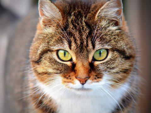 perchè i gatti leccano e poi mordono
