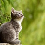 Gatto: feci molli e maleodoranti