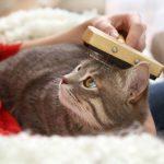 Salute e cura del pelo del gatto